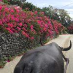 沖縄の冬がおすすめな7つの理由